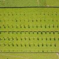 Inspectiefoto's voor een boomgaard